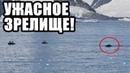 АНТАРКТИДА Ш0КИРОВАЛА ВЕСЬ МИР! 15.01.2020 ДОКУМЕНТАЛЬНЫЙ ФИЛЬМ HD