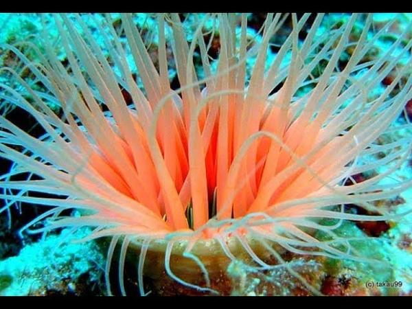 Подводный мир Удивительные хищники океана борьба за выживания жутких и прекрасных