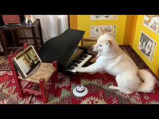 """A dog performing """"Smile"""" with Lady Gaga"""