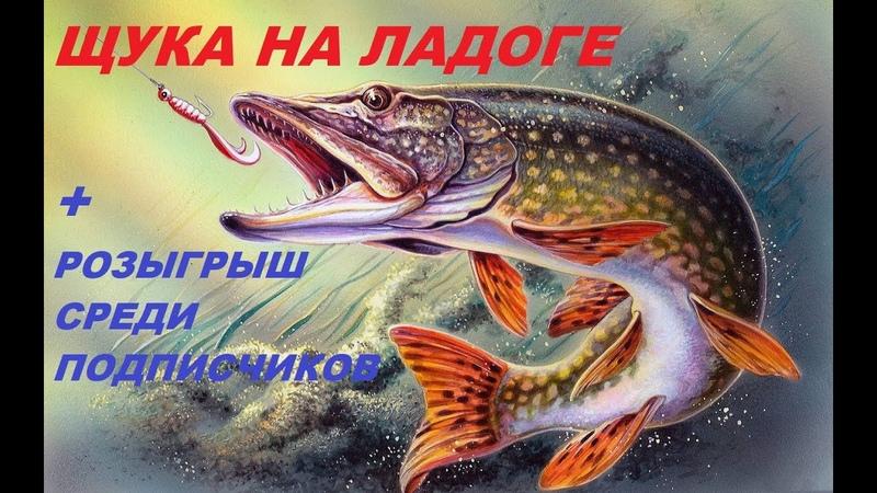 ЩУКА НА ЛАДОГЕ РОЗЫГРЫШ РР4 РУССКАЯ РЫБАЛКА 4 KOT TV 46