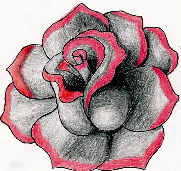 drawings of roses - 648×614