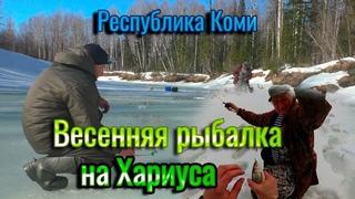 Весенняя рыбалка на Хариуса! Рыбалка в Коми.Отдых на природе. Завершаем сезон ловли хариуса со льда.