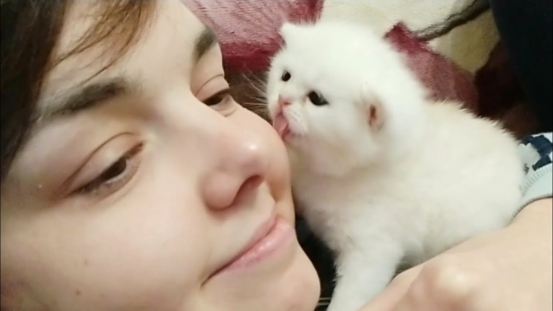 21 Days After Birth Cuteness Overload little kitten Kisses me