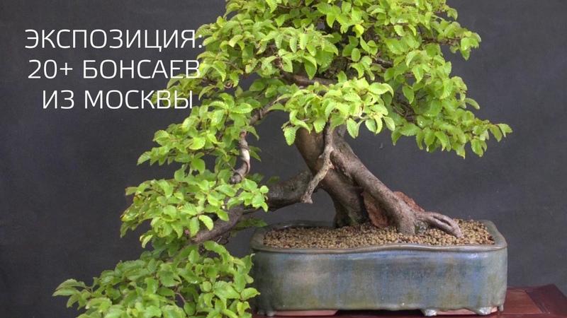 Первый Евразийский Форум ландшафтного искусства Атмосфера 2019