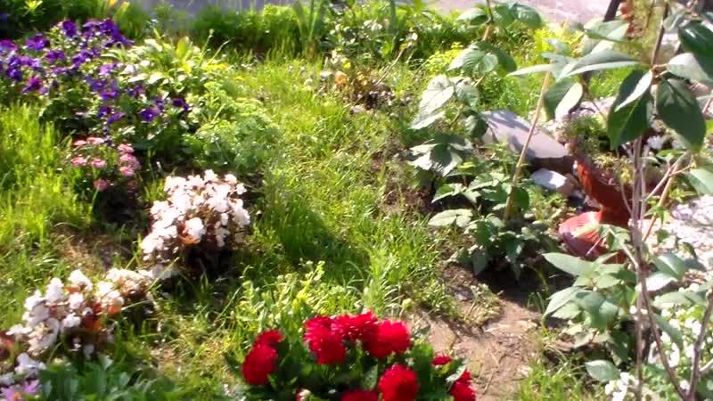 2 Во саду ли в огороде у Петровны