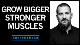 Science of Muscle Growth, Increasing Strength & Muscular Recovery   Huberman Lab Podcast #22