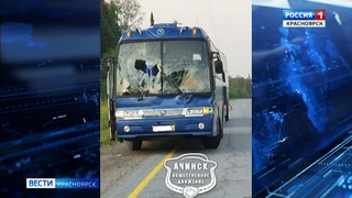 Под Красноярском лось выскочил на дорогу и спровоцировал ДТП с рейсовым автобусом