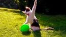 Смешные кошки 2019 Новые приколы с котами и собаками, смешные коты приколы 2019 funny cats 71
