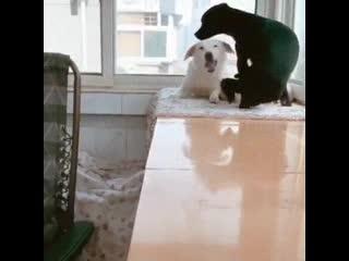 Папа принес маме вкусняшку, пока она кормила щенят