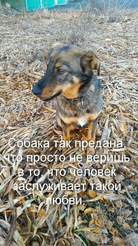 ОРСК!!!НОВОТРОИЦК!!!   Ищет дом и ждёт | Объявления Орска и Новотроицка №11259