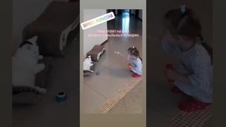 4940).  - Котик Малыш Блонд (дома Бенни, Бен) уехал домой (видео из дома)