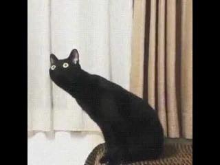 (Мем) Кот - нихуясебе ебанутся