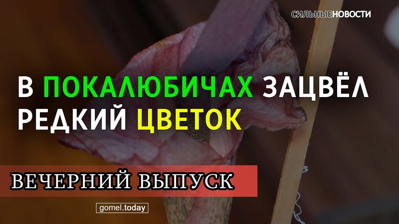 Редкий вонючий цветок зацвёл в доме. «Вечерний выпуск» СН. 14.02.2020