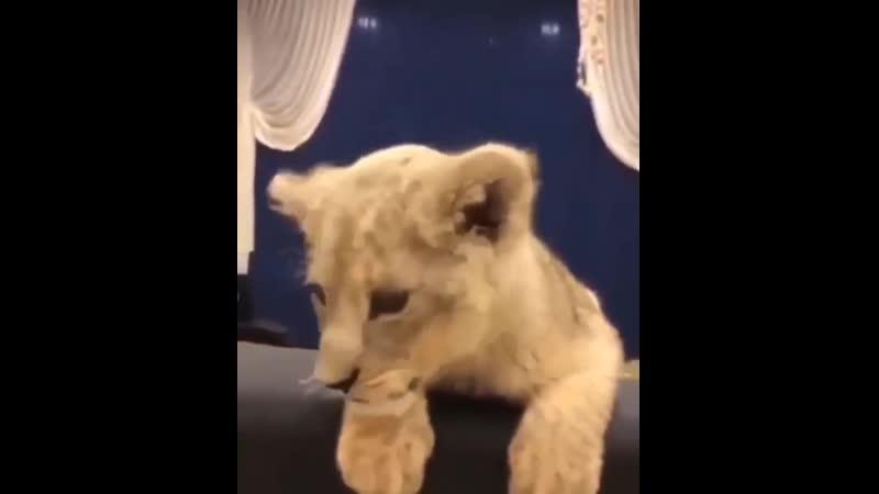 Будущий царь зверей