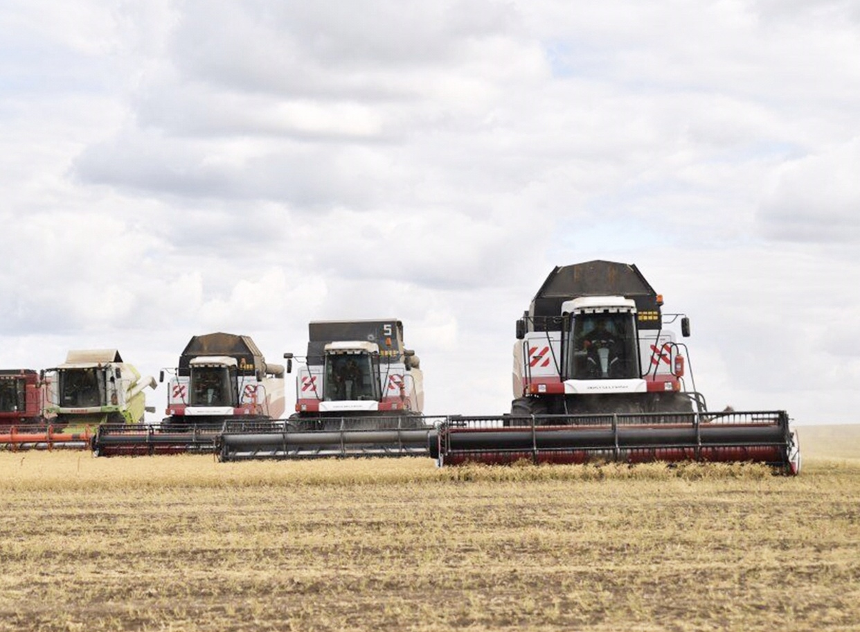 Саратовские аграрии в четыре раза покрыли внутренние потребности региона в зерне