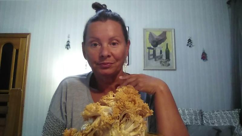 Царь гриб Грибная капуста Спарассис кудрявый