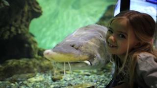 Водное шоу Дельфинарий Океанариум Владивосток 2020 Талантливый морж Миша из Приморского океанариума