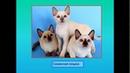 окружающий мир Про кошек и собак 2 класс Бирюк Т В