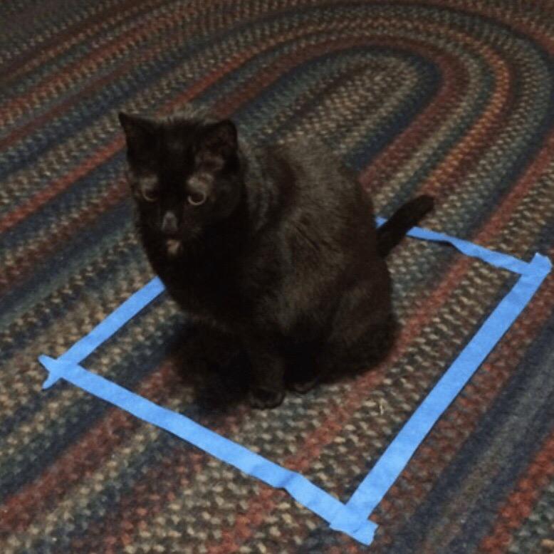dlhuZmDrHl0 - Новая фишка для котов