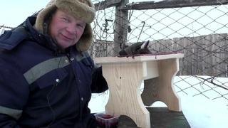 Чем топит печь мусорщик  нет денег на двора морозы в Сибири