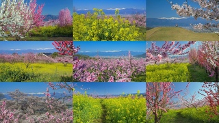 [4K] Superb view of peach,cherry rape blossomsYamanashi Kofu Basin in spring