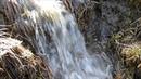 Весна природа ручьи пение птиц релаксация