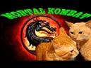 КОШАЧИЙ БОКСБОЙ - ДРАКА КОТОВ, КОШКИ ДЕРУТСЯ- КОШАЧЬИ ПРИКОЛЫ/ MORTAL KOMBAT - RUSSIAN CAT BOX