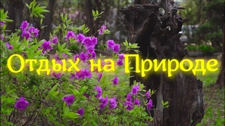Красивое Пение Птиц / Отдых в Парке / Медитация / Релаксация / Relaxing Nature Video - Ultra HD