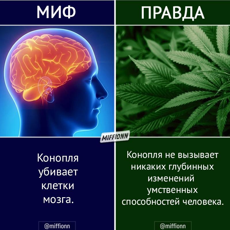 ПЦУ пока не вникала в вопрос легализации медицинского каннабиса, - Епифаний - Цензор.НЕТ 291