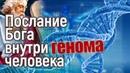 Сенсация: Бог оставил послание внутри генома человека!