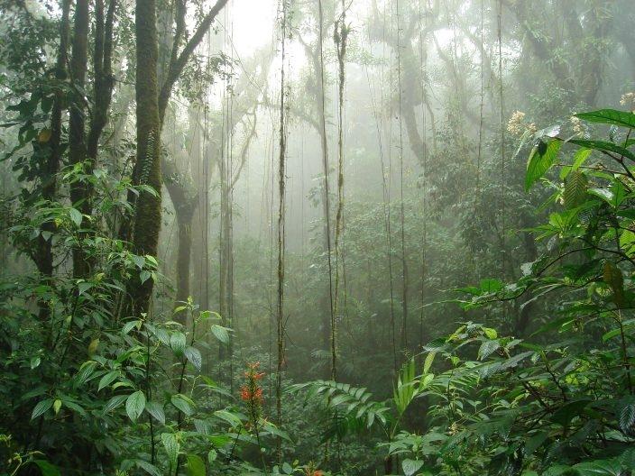 Что посмотреть в Коста-Рике?, изображение №2