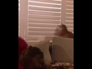 He мeшай, не видишь я в окно смотрю!