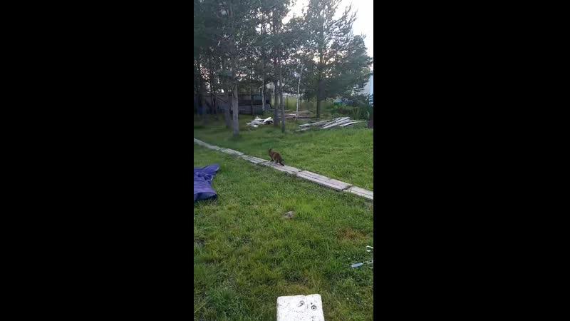 Руся на прогулке следит за птичкой