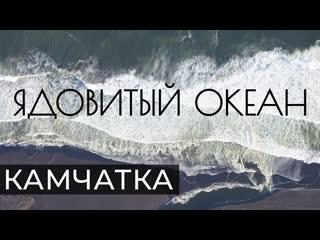 Ядовитый Океан. Документальный фильм о крупнейшей экологической катастрофе на Камчатке