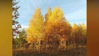 Золотая осень - бабье лето