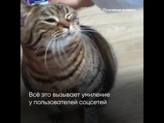 Толстые кошки в Сети