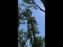 Скайпе парк Сочи