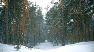 Зимний лес в снегу, с сильным снегопадом и ветром | Звуки метели и вьюги | Белый шум для релаксации