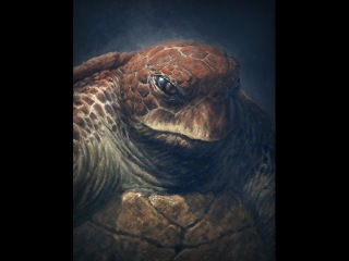Mutant Turtle of Indeterminate Age and Unspecified Fighting Style (digital art time lapse)