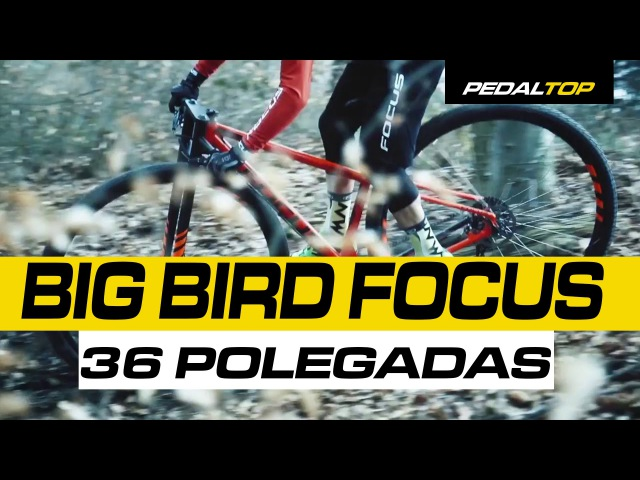 BIG BIRD 36 FOCUS - LEGENDADO - RODAS 36 POLEGADAS PEDALTOP