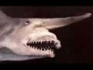 most Amazing and Bizarre Deep Sea Creatures