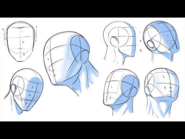How to Draw Heads Dividing it Into Thirds