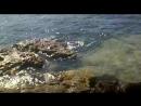 Рыбцех (Крым, Черноморское, панорамное видео, июнь 2015 г.) 1