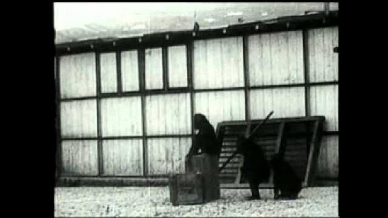Kohler Chimpanzees