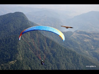 ШОК! ГРИФ ВРЕЗАЛСЯ В ПАРАПЛАН НА ВЫСОТЕ 300 МЕТРОВ( At 300 meters paraglider crashed into the neck)