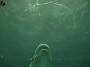 Красивое зрелище дельфины пускают пузыри и кольца и играют с ними