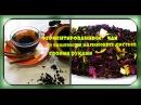 Ферментированный чай из листьев малины и вишни/своими руками/fermented tea, cherry and raspberry