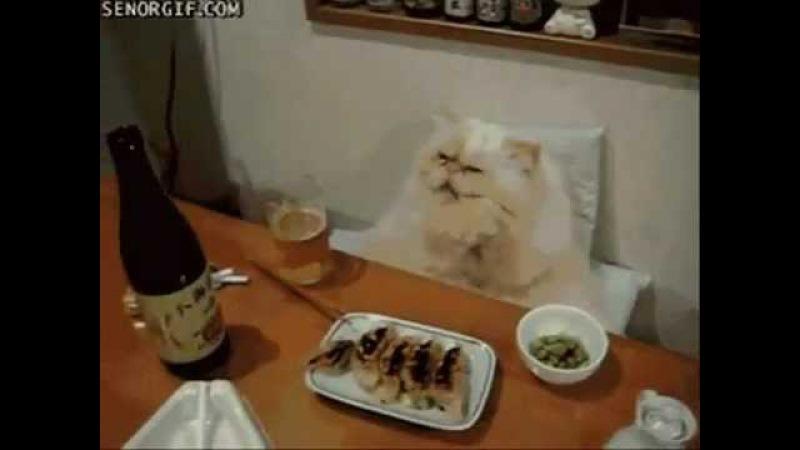Выйду ночью в кухню с котом