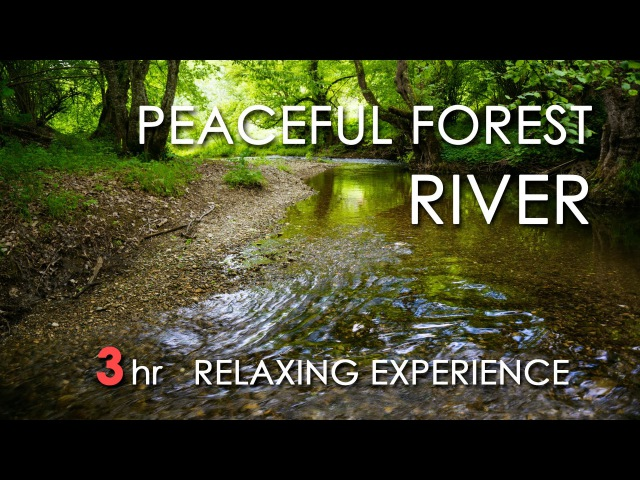 Relaxing River Sounds Peaceful Forest River 3 Hours Long HD 1080p Nature Video