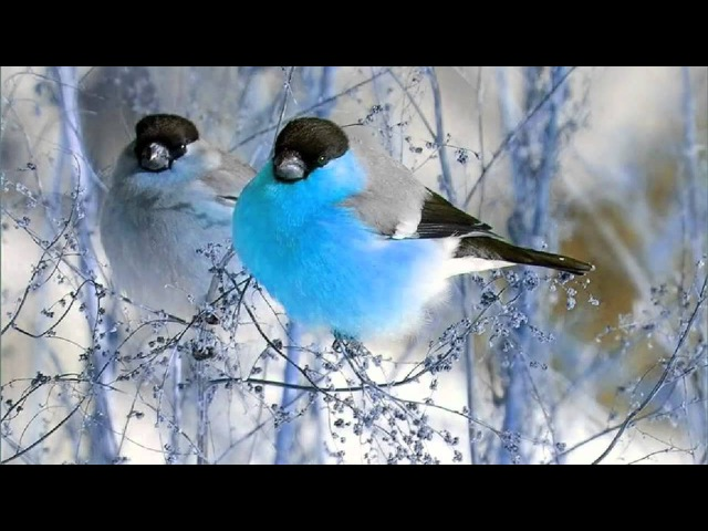3 Hour bird sounds Relaxation - Nature sounds music for Meditation - Birds chirping, birds singing